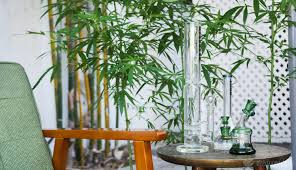 Pot Lounges Apply for State Licenses