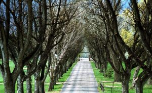 Tree Month Commemorates a Big Anniversary to Honor all Trees